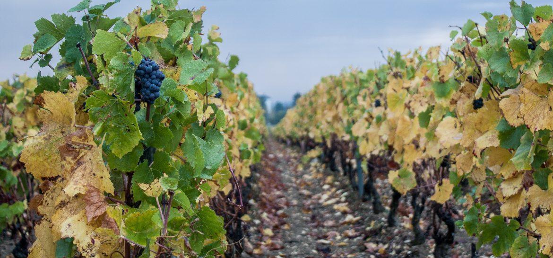 vignoble-bourgogne